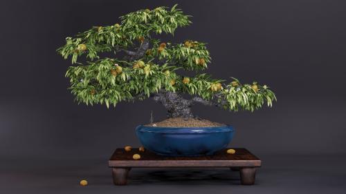Kumquat Bonsai. Cinema4D et VRAY
