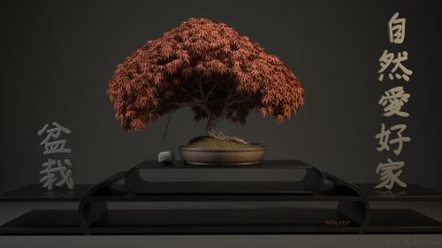 Acer-Palmatum-VRAY-2-Automne